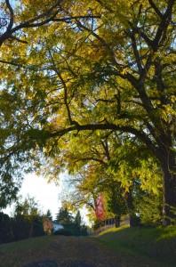 Tree Oregon